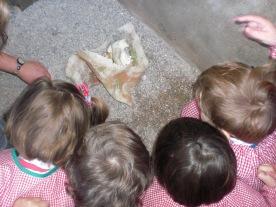 los niñps decubren un enterramiento